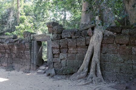 A huge ficus grows on the old stone wall. The tree destroys the ancient stone wall with its roots. Stok Fotoğraf