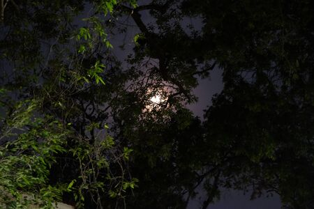 A full moon emits light in the night sky. Moonlight shines through the branches of a tree. 写真素材