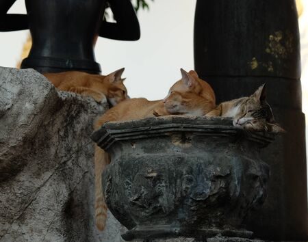Several red cats are resting near the stone sculptures in the park. Stock Photo