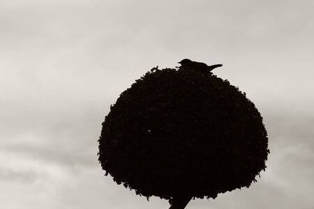 A lonely bird sits on a decorative tree against the sky.