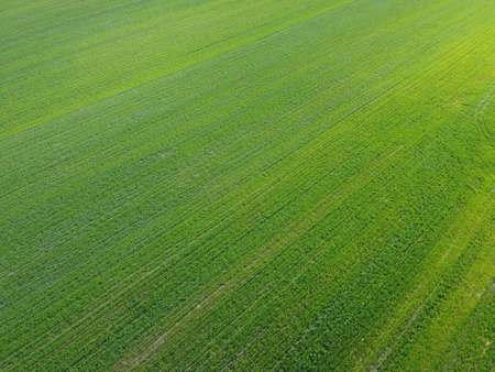 Green agricultural field, aerial view. Farmland landscape. Background 스톡 콘텐츠