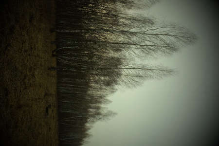A birch grove in a late spring evening. Leafless trees in March. Landscape, vignette.