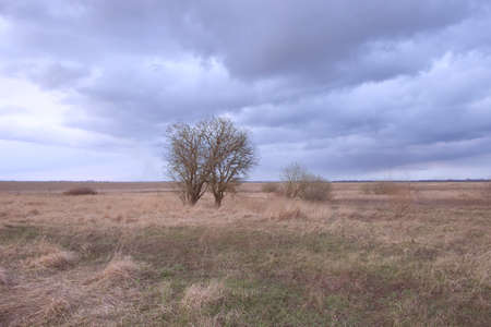 Small trees among dried herbs in the field in the evening. Beautiful cloudy sky over an autumn field. Autumn landscape. Archivio Fotografico