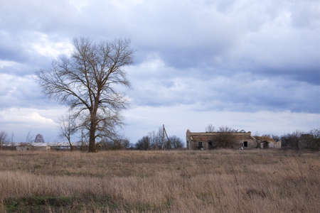 Gloomy evening landscape. A tall leafless tree near a ruined building. Dry autumn vegetation. Archivio Fotografico