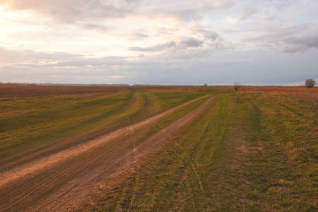 Two diverging dirt roads. A fork in two roads in a field in the late evening.