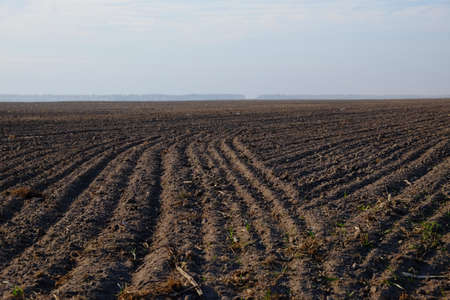 A freshly plowed farm field. Cultivated agricultural land. Landscape.