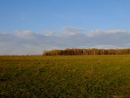 Cloudy sky over a field. A small forest in the distance. Archivio Fotografico
