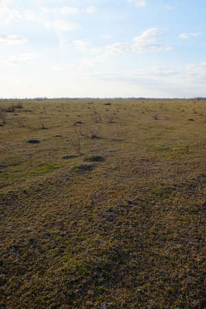 Vast expanses of steppe. The sky over the grassy field. Landscape.