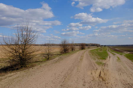 Wide dirt road among fields. A tree by the road. Landscape.