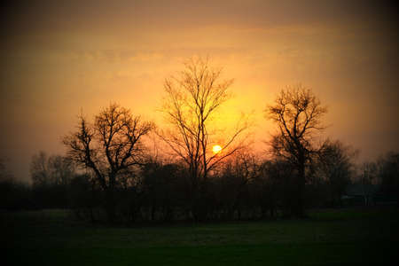 Sunset behind the trees. Silhouettes of trees on the background of the sunset. Evening landscape.