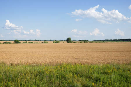 Crops in scenic agricultural fields in summer. Picturesque blue sky over the village plain. Scenery.