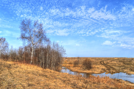 spring landscape, birch, and dry grasses by the river in the afternoon under a blue day Stock Photo