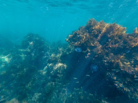 coral reef and Atoll seaweed overgrown with sea life with jellyfish and fishes Banco de Imagens