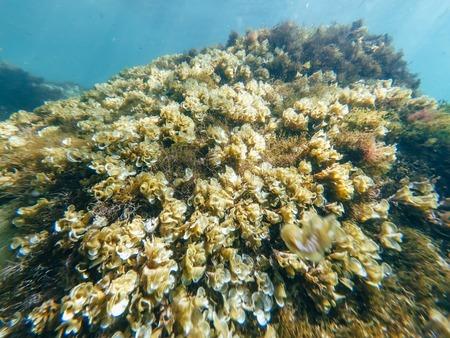 marine sponges and algae, the polyps on attale of sea Stock Photo