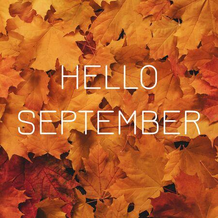 Background of orange maple leaves with a congratulatory inscription Hello September Banco de Imagens - 150088889