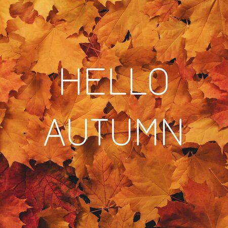 Background of orange maple leaves with a congratulatory inscription Hello Autumn Banco de Imagens - 150090178