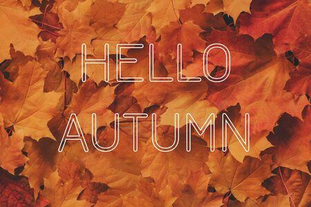 Inscription Hello Autumn on the background of maple leaves Banco de Imagens - 150089529