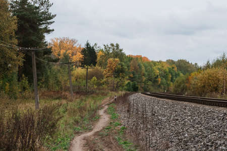 railway in the forest in autumn a cloudy day