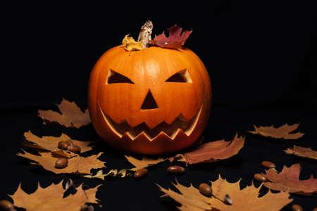 Jack-o  - lantern pumpkin on dark background with orange autumn maple leaves and acorns