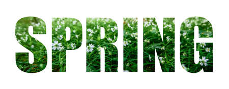 Text Spring on a background of white flowers