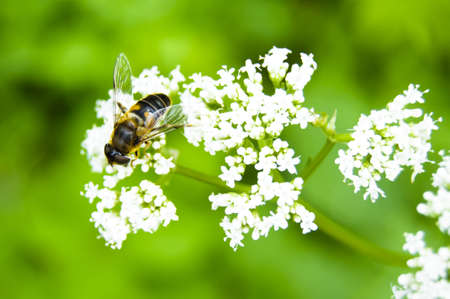 Bee on a flower Stock Photo - 14932589