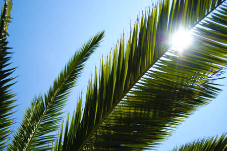 Palm leaves in the sunny sky