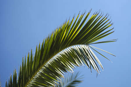 Palm leaf in the sunny sky