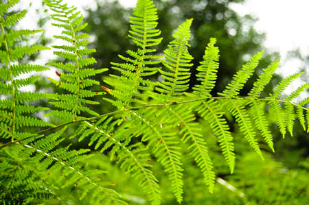 Fern plant in the mountain forest