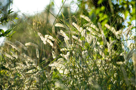 Grass and plants in the meadow in sunset.