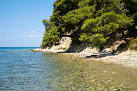 Beautiful sea shore with trees and sandy beach Stock Photo
