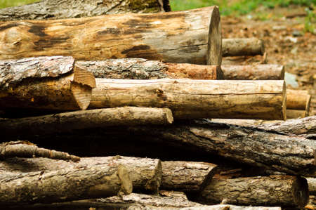 Pine logs in the forest Stock Photo