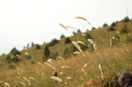 Dry grass in the field in autumn