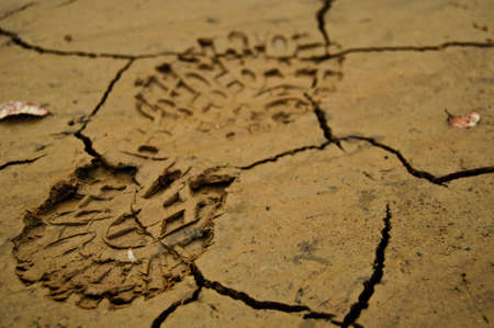 Footprint of a hiking shoe in the mud