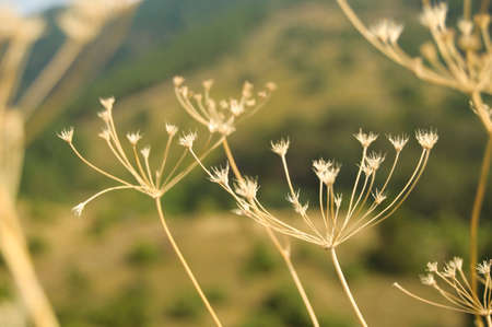 Dry grass plants in field in autumn