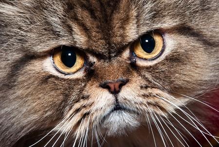 whiskar:  pretty cat portrait