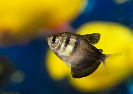 peces de acuario: Acuario de peces peque?os