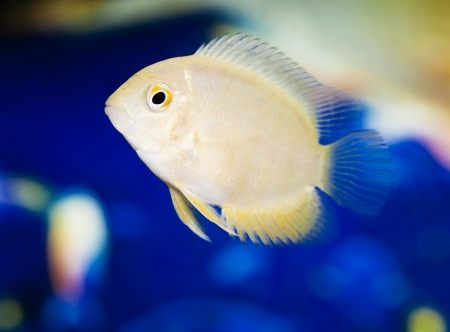 aquarian small fish Stock Photo - 20332113