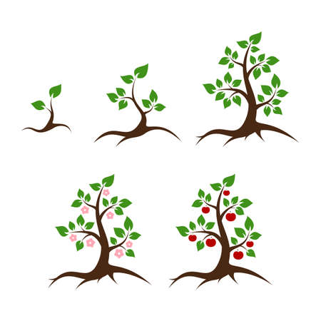 Apple tree vector illustration - shoot, young plant, big tree, flowers and apples