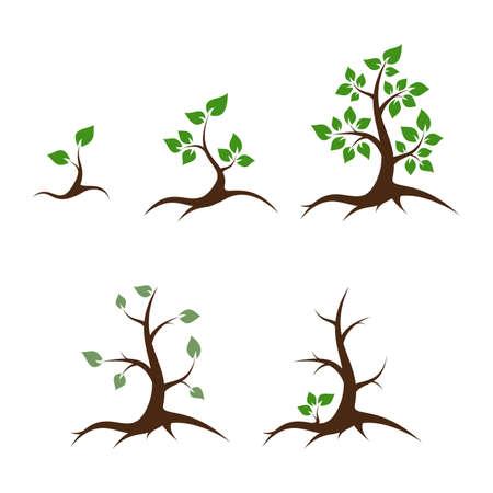 leven en dood: Het leven van de boom - shoot, jonge planten, grote boom, oude boom en de dood - vector illustratie