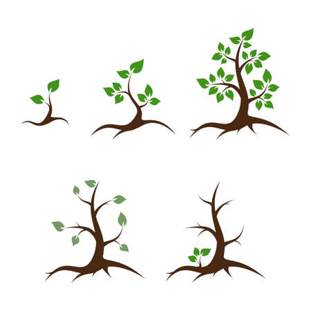 Life of the tree - shoot, young plant, big tree, old tree and death - vector illustration