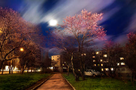 A shot was made in one of Sevastopol streets  A beautifil tree seems like spring incarnation  Clouds turned into degraded line because of the long exposure ped  Stock Photo - 18793141