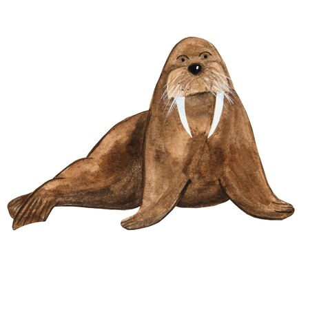 good brown walrus in watercolor with fangs in cartoon style