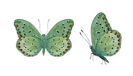 green tropical butterfly with red spots watercolor Foto de archivo - 137792502