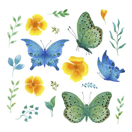 set green and blue tropical butterfly with watercolor flowers on a white background