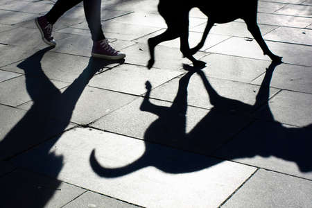 Shadow of a dog and its owner taking a walk in the city