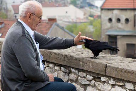 Belgrade, Serbia -  April 9, 2019: Lonely senior man sitting alone on a city bench and stroking a crow or raven bird