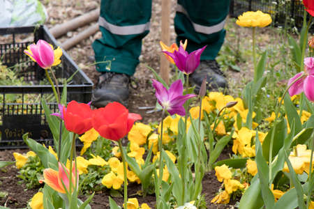 Colorful spring garden with different flowers and a maintenance worker legs in the blurry background