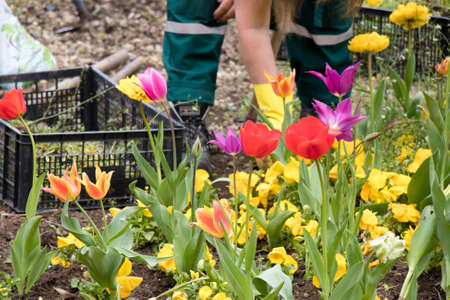 Colorful spring garden with different flowers and a maintenance worker removing the weed in the blurry background