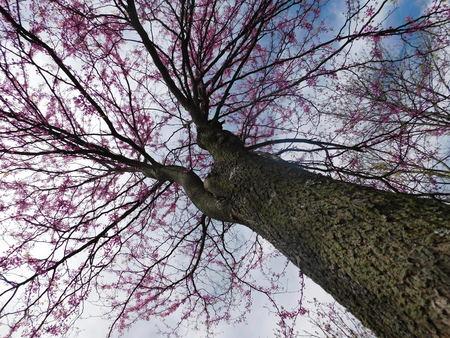 Tall tree trunk from bottom