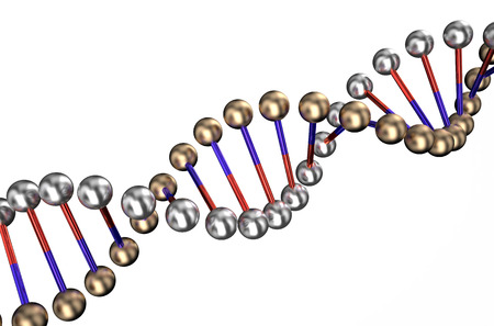 dna isolated on white background photo